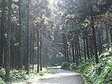森林步道-杉木