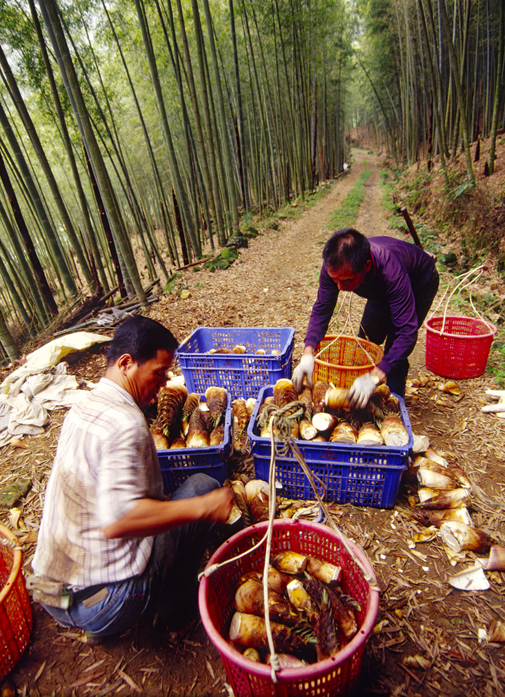 2006 Photography Competition Excellent Work Wu, Ling-tu - Bamboo Farmer