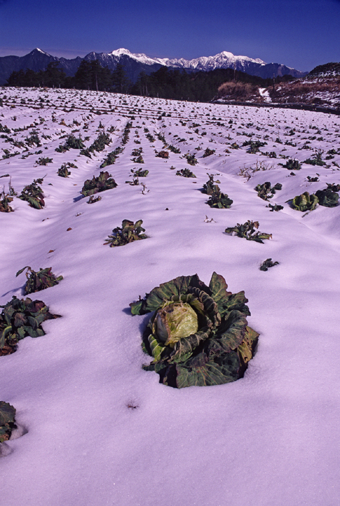 2006 Photography Competition Selective Choice Cai, Shi-yao - Cabbage Garden Covered by Snow